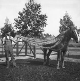 Helen Lukins Gott Horse with Mane